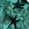 Galapagos Photo Amazing starfishes in Genovesa Island of Galapagos
