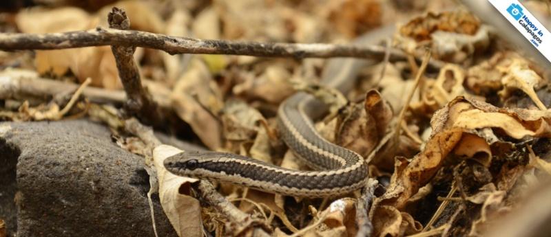 Galapagos Islands An Incredible Snake In Espa 241 Ola Island