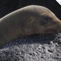 Galapagos Photo A sea lion resting in Santa Fe Island of Galapagos