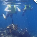 Galapagos Photo A place to discover the amazing marine wildlife