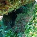 Galapagos Photo Discover this beautiful fish in Galapagos