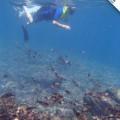 Galapagos Photo Enjoying really awesome underwater experiences