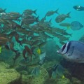 Galapagos Photo The amazing marine wildlife that exist in Galapagos
