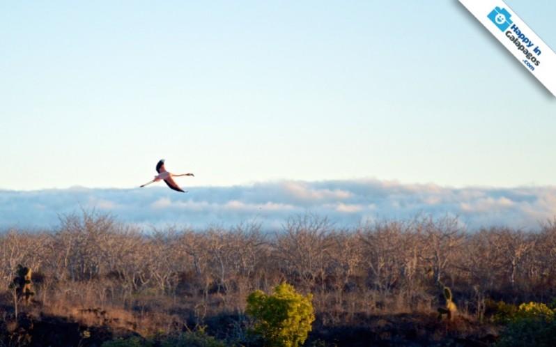 Galapagos Photo Discover the Galapagos' wonders