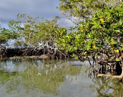 Galapagos Photo Mangroves in Galapagos National Park